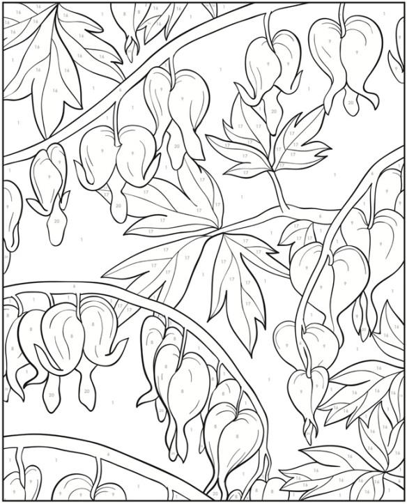 Fleurs cœurs-saignant à colorier
